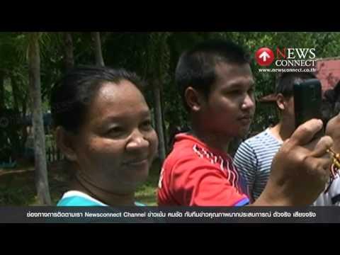 หนุ่มตรังเยี่ยมขึ้นขี่หลังฝักวัวชนแสนดุได้สำเร็จ NewsConnect Channel