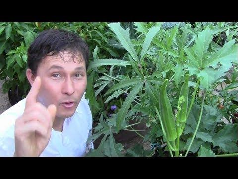 Xxx Mp4 Top 7 Crops That Thrive In The Hot Summer Desert Vegetable Garden 3gp Sex