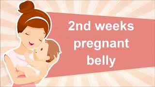 2nd week of pregnancy   Symptoms, Tips And Body Changes