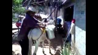 La Vida Tipica De Cuajinicuilapa Costa Chica De Guerrero.3GP