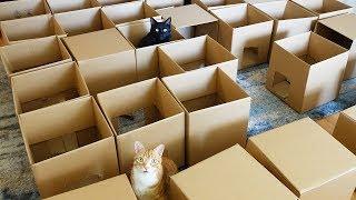 AMEOW-ZING 50 Box Cat Maze!