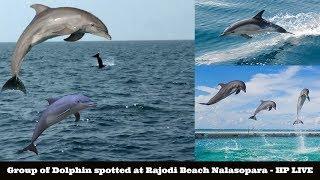 Group of Dolphin spotted at Rajodi Beach Nalasopara - HP LIVE