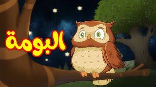 البومة - طيور بيبي