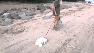 Hot Blonde Dragging Her Pussy On The Beach