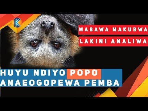 Xxx Mp4 HUYU NDIYO POPO ANAEOGOPEWA PEMBA NA MABAWA YAKE 3gp Sex
