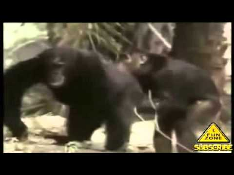 Animal Sex Video Compilation 2014   Funny Video HD 240p