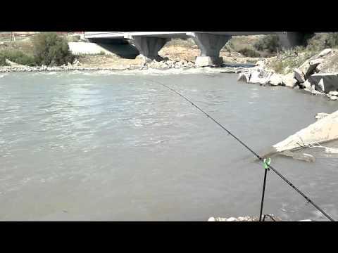 ловля османа в алматинской области