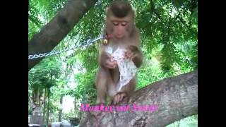 Comedy Funny Animals Video Clip 2015 | Monkey play on the tree
