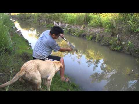 Pesca de Traíras na Superfície 9 Jackall Bros Bonnie
