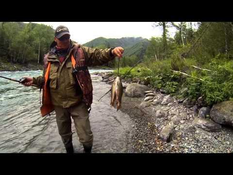 рыбалка на катуни в июле видео