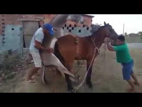 Xxx Mp4 Donkey And Horse 3gp Sex