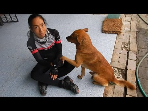 Xxx Mp4 Horny Dog Thailand Adventure 3gp Sex