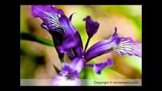 NAA PRANA PRIYUDA....... Telugu Christian Song