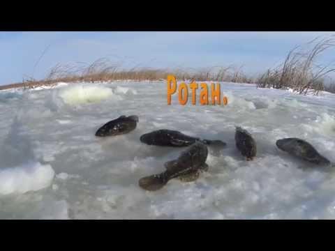 весенняя рыбалка в омске