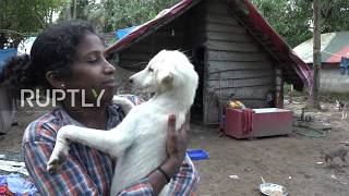 India: Kerala woman refuses flood rescue to stay with her 25 dogs
