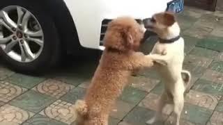 Kongfu Fighthing