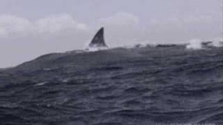 Jaws 5 Trailer (pre release)