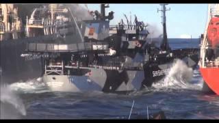 Bob Barker & The Sea Shepherd ||They're destroying us Whale Wars