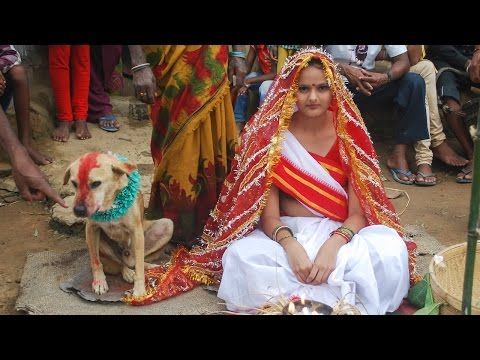 Xxx Mp4 Woman Marries Dog In Traditional Ceremony In India 3gp Sex