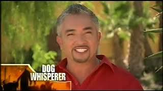 Dog Whisperer Season6 2 Cujo and Molly