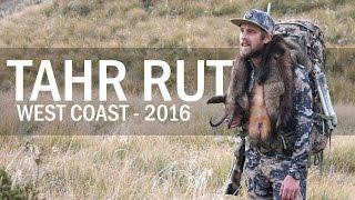 Chasing Trophy Bull Tahr - West Coast Rut 2016