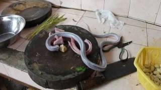 Vietnam, Hanoi: Eating snake, drinking blood and bile