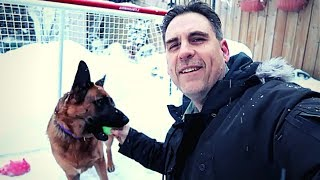 Enjoying Snow Day With My German Shepherd