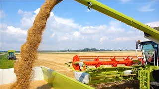 Claas Lexion 780 TT   Challenger MT765D   Terberg 10x4   Wheat Harvest '14 - Veerman Goudswaard