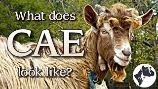 What Does CAE Look Like?