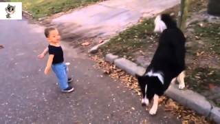 pc mobile Download Best Funny Babies - Funny Babies Compilation - Amazing Babies Dancing - Funny Baby's #2