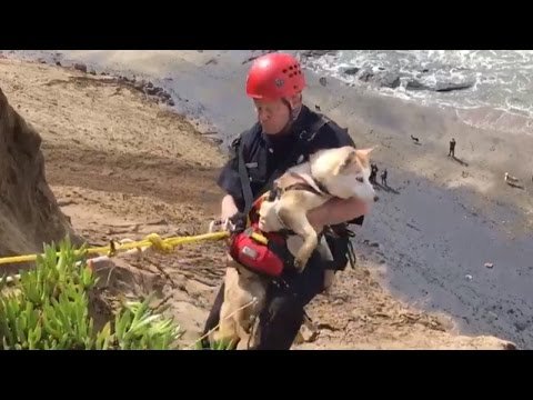 Xxx Mp4 Watch Firefighter Rescue Dog Who Fell Down Cliff 3gp Sex