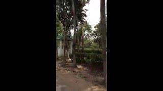 Madhobpur Tea Garden (Beautiful Bangladesh )