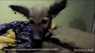 The Most EPIC Animal Rescue Video You Will Ever See!