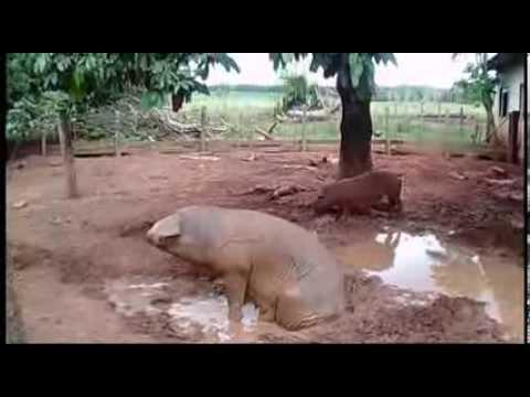 Suspeita de Zoofilia em Mato Grosso homem é encontrado morto