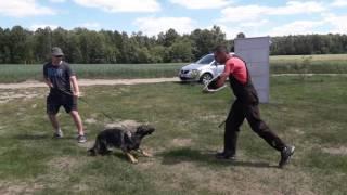 K9 Training With A.Kęsicki - Haydy Dragon Slovakia / Biki Ramik / Etna Wolkar