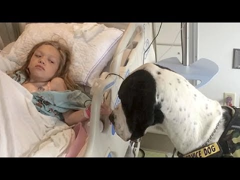 Xxx Mp4 GIANT DOG APPROACHES LITTLE GIRL IN HOSPITAL BED NOW KEEP YOUR EYE ON HIS BACK 3gp Sex
