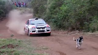 Rally Car Jumps Over Dog (with slow motion)