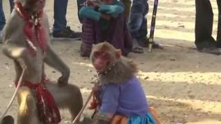 मदारी बन्दर का कॉमेडी खेल,  bandar bandariya ka khel :  madari monkey drama comedy Circus show