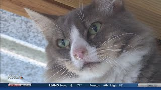 Why you can still adopt a feral cat