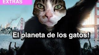 El Planeta de los Gatos! l WDF Extra
