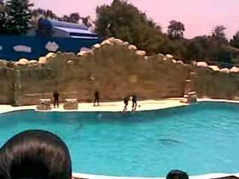 Mundo Marino Sea World Six Flags Mexico