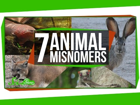 7 Animals That Aren t What We Call Them