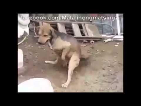 FUNNY DOG MASTURBATION with gun fire