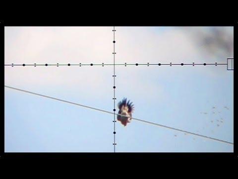 100 Yard Dove Shot Dove Hunting with Edgun Matador PCP Air Rifle Nov 6 2011