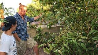 DECADES OLD Food Forest In Phoenix | Tour A Master Gardener