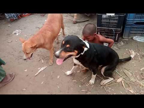 Xxx Mp4 Dog Are Man Best Friend Mans Best Friend Dog In Madhupur Tangail 3gp Sex