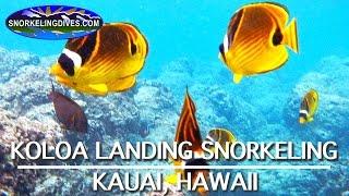 Snorkeling Koloa Landing   Kauai