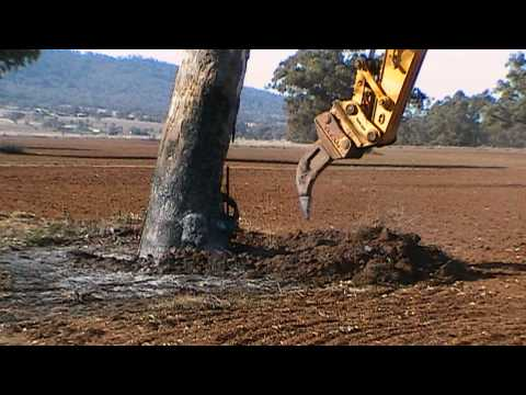Excavator Removing Gum Tree