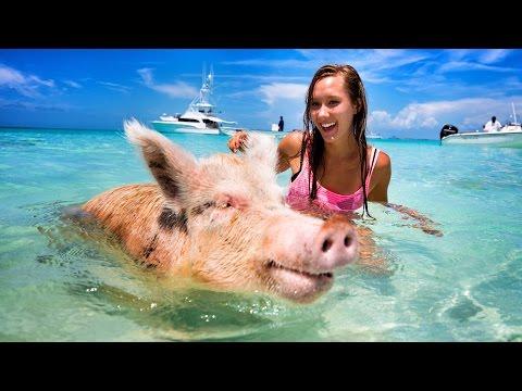 Shark attacks my wife - PIG ISLAND!
