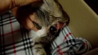 복순이 출산   동영상